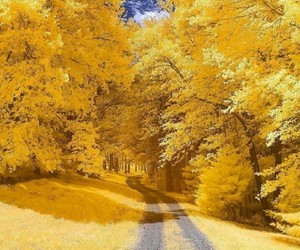 yellow, tree, and autumn image