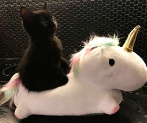 cat, fashion, and unicorn image