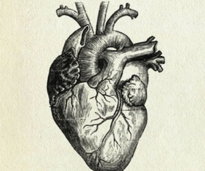 heart, anatomy, and drawing image