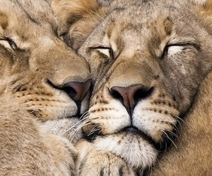 amazing, animals, and creature image
