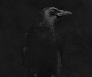 black, dark, and raven image