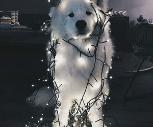 dog, light, and cute image