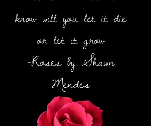 Lyrics, mendes, and roses image