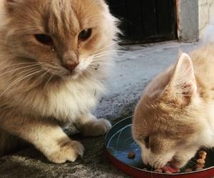 Gatos, mascotas, and bigotes image