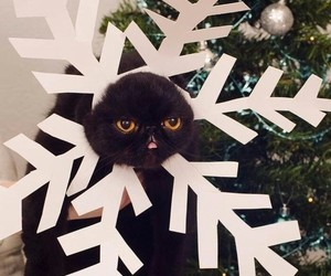 cat, christmas, and new year image