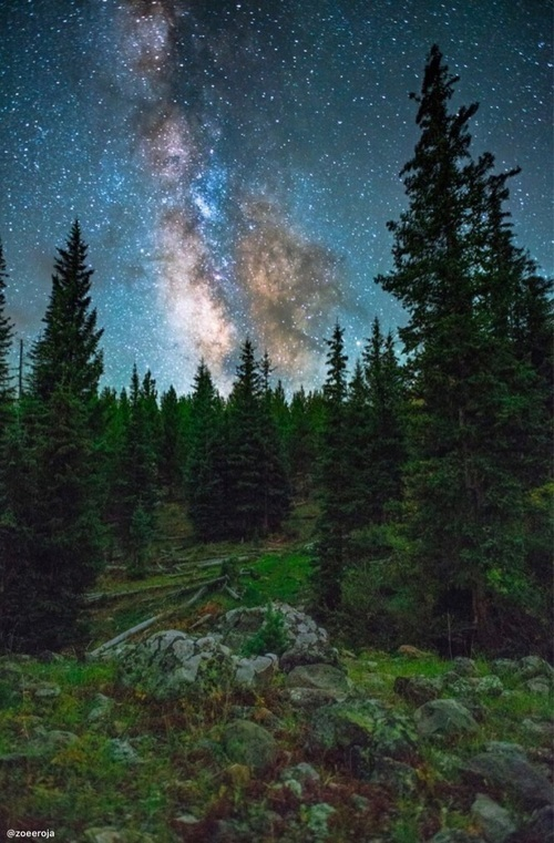 nature, forest, and galaxy image