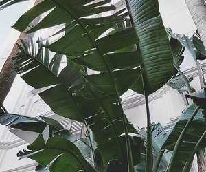 green, palmtree, and summer image