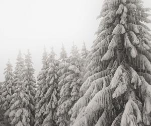 christmas, holidays, and seasons image
