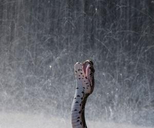 anaconda, ًًًًًًًًًًًًً, and snake image