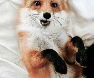 fox and animals image