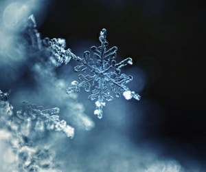 beautiful, photography, and snowflake image