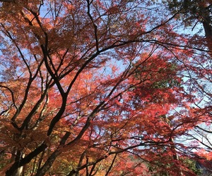 autumn, colourful, and japan image