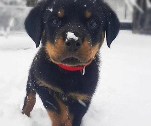 puppy, cute, and snow image