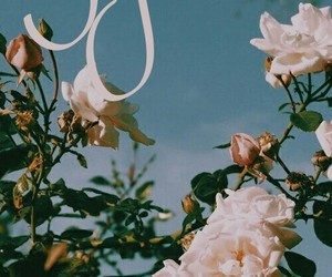 flowers, Sagittarius, and sagitário image