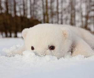 cute, bear, and snow image