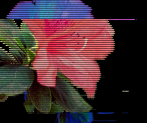 flowers, theme, and aesthetic image