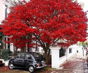 aesthetic, romantic, and red image