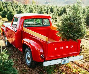christmas tree, christmas, and xmas image