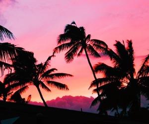 beautiful, palm trees, and paradise image