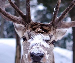 beautiful, photography, and snow image
