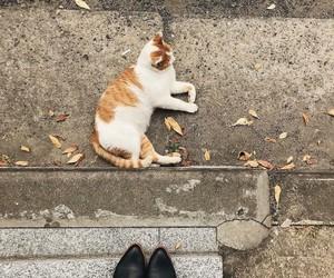 cat, autumn, and love image