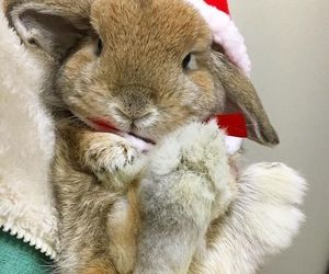 animals, bunny, and christmas image
