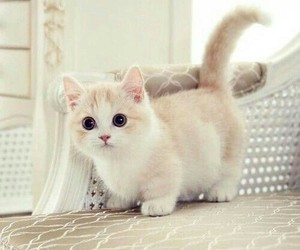 cat, gatinho, and cute image