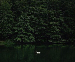 green, nature, and Swan image