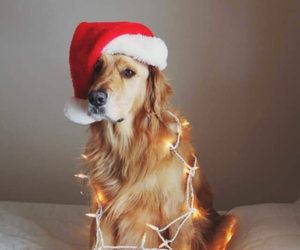 animals, festive, and merry image