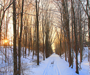 landscape, snow, and path image