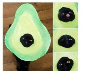 meme, cat, and avocado image