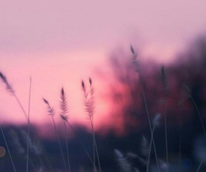 pink, wallpaper, and nature image