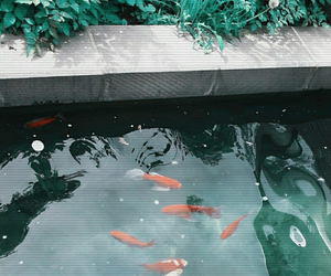 theme, fish, and green image