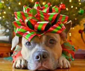 dog and christmas image