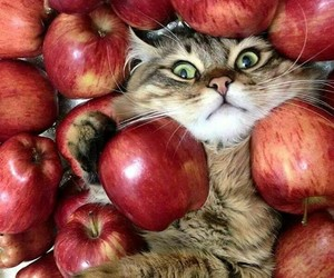 animal, apple, and cat image