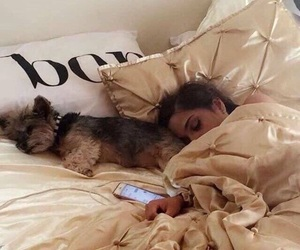 bed and dog image