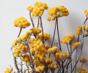 dried flowers, yellow, and golden yellow image