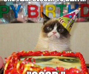 grumpy cat, birthday, and funny image