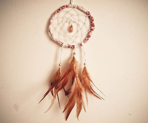 feather and bird image