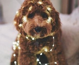 dog, light, and puppy image