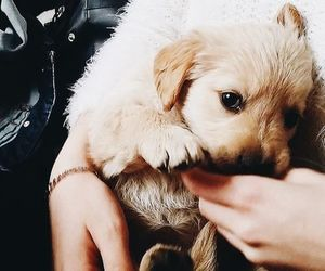 cutie, dog, and puppy image