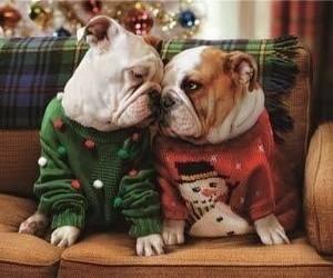 Animales, christmas, and perro image