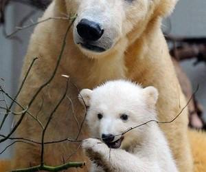 animals and bear image