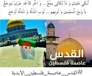 Algeria, algerie, and فلسطين image