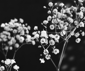 black and white, flowers, and branches image