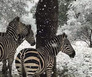 snow and zoo image