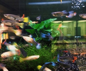 aquarium, bubbles, and the image