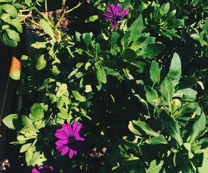 sunlight, iphonephotography, and purpleflowers image