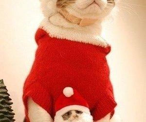 cats, christmas, and mini me image
