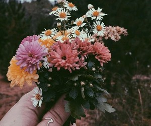 flowers, bohemian, and plants image